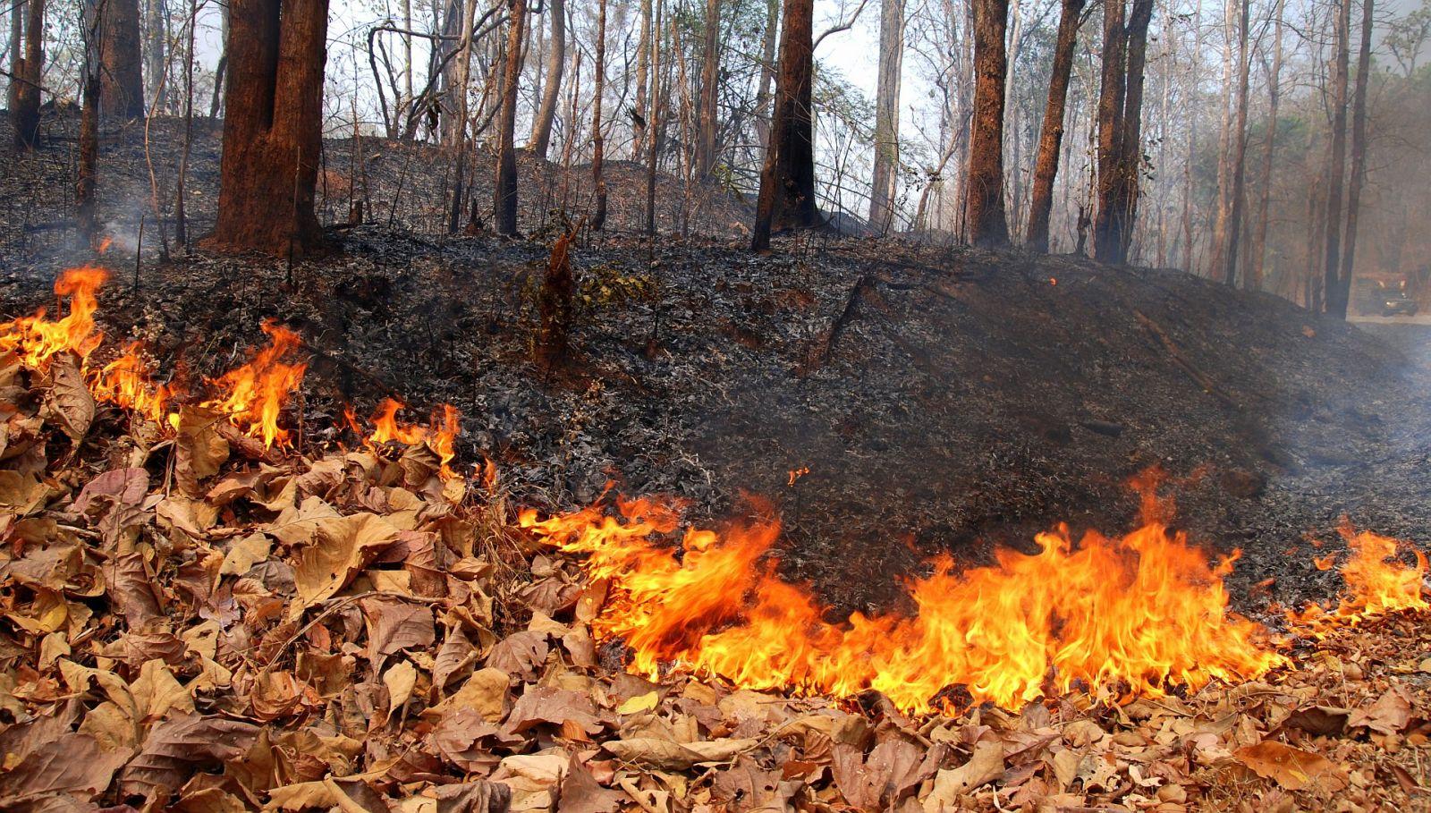Пожароопасный сезон открыли в Подмосковье из-за теплой погоды